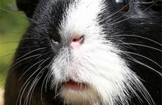 Oakland Hills Veterinary Hospital Website